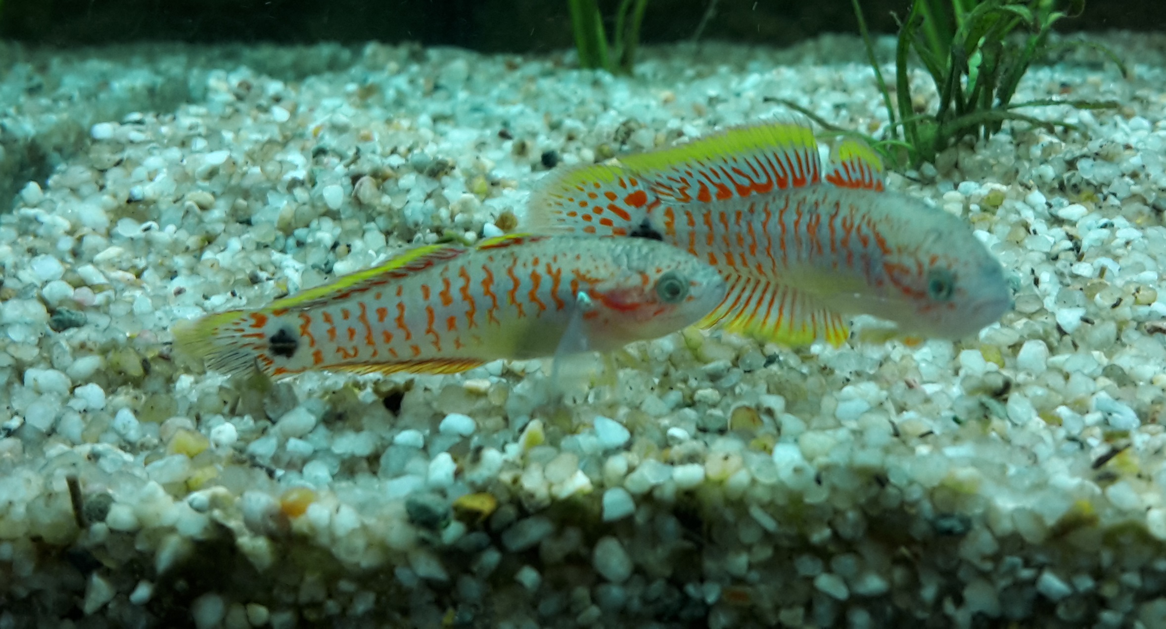 nieuw aquarium vissen gaan dood